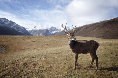 deer400x266
