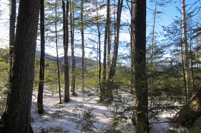 forestwinter400x266